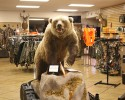 bear_display
